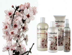 bodycology cherry blossom2