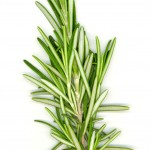 rosemary oil hair, rosemary oil hair breakage,rosemary oil hair loss,rosemary oil gray hair