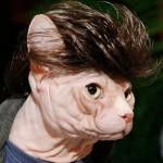 catwearingtoupee