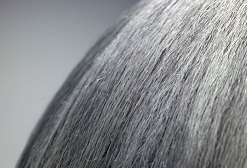 Greying Hair